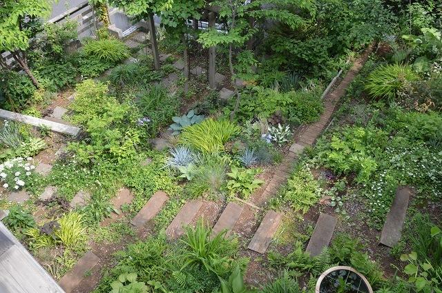 5月4日・11日の庭。_c0124100_18131676.jpg