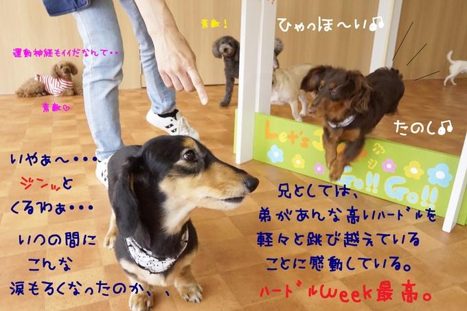 d0220513_1813825.jpg