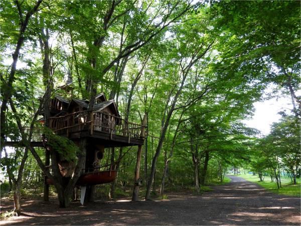 おしぎっぱの森に涼みに来ませんか_b0174425_18312458.jpg