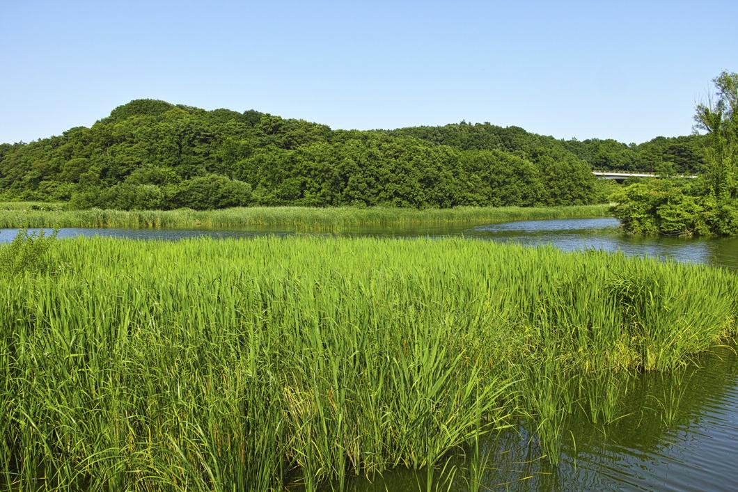 ヤブカンゾウ 夏の公園にて_c0223825_02163066.jpg