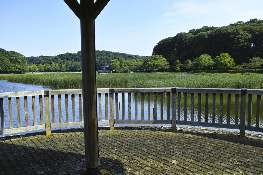 ヤブカンゾウ 夏の公園にて_c0223825_02190071.jpg