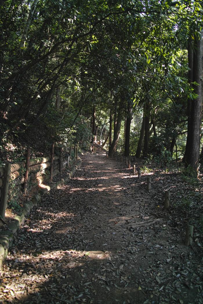 ヤブカンゾウ 夏の公園にて_c0223825_02290965.jpg