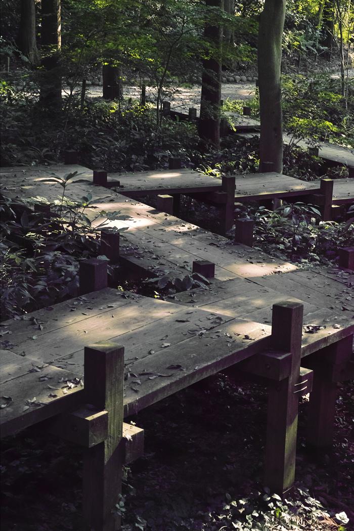 ヤブカンゾウ 夏の公園にて_c0223825_02300936.jpg