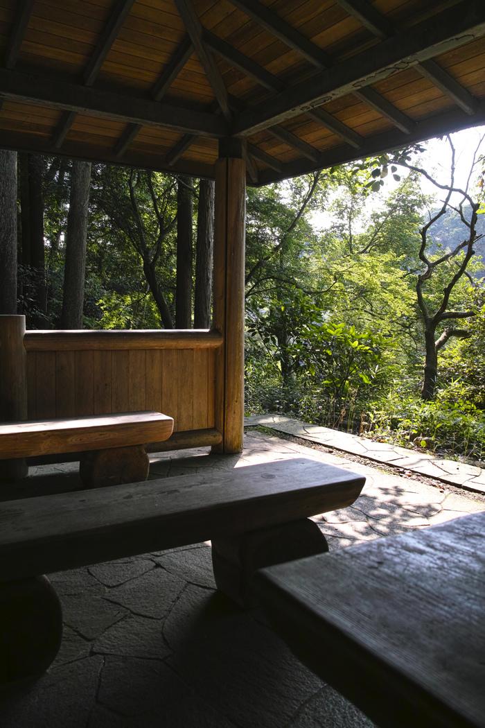 ヤブカンゾウ 夏の公園にて_c0223825_02323745.jpg