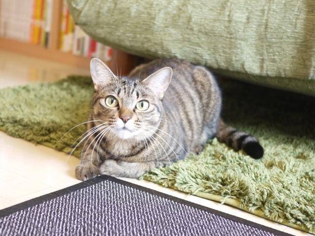 猫のお留守番 琥珀ちゃん編。_a0143140_22033808.jpg
