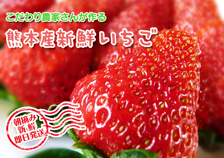 熊本限定栽培品種のイチゴ『熊紅(ゆうべに)』 令和元年度の生産に向け苗床とハウスの様子を取材!前編_a0254656_17253553.jpg