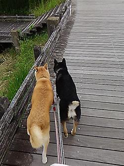散歩代行から泰蔵を想う_b0057675_13331415.jpg