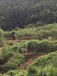 2017年7月5日の朝倉市の大雨の影響。_f0018099_21135642.jpg