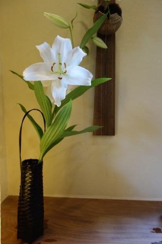 庭の花、カサブランカ_a0197730_23185289.jpg