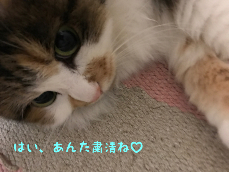 c0181639_20134343.jpg
