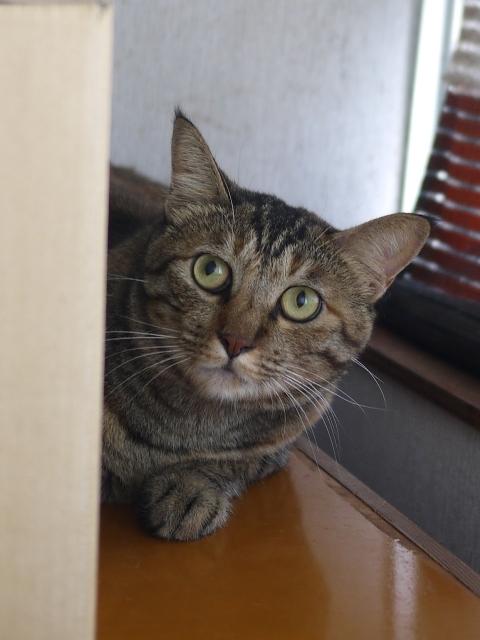 猫のお留守番 キィちゃん編。_a0143140_23364794.jpg