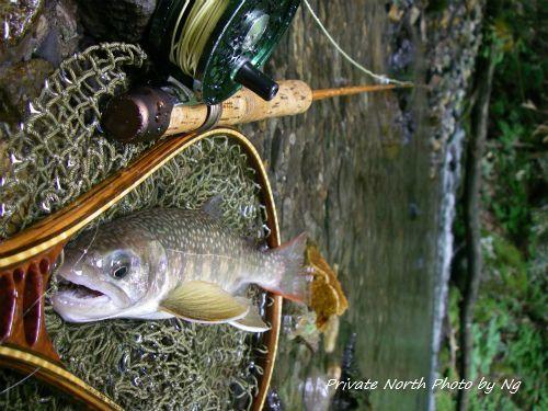 昨日の釣り_d0261148_15184306.jpg