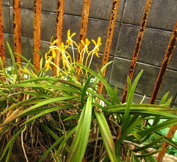 富貴蘭花の季節                         No.1802_d0103457_23430936.jpg