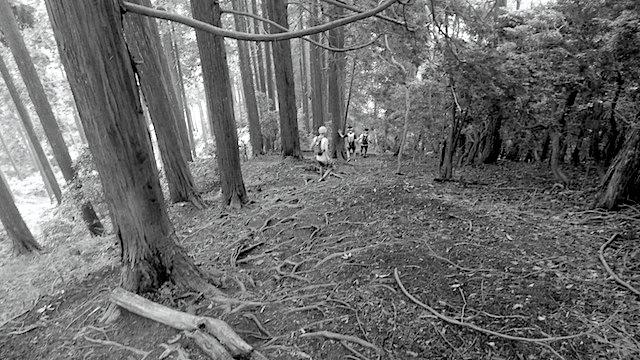 精霊の森トレイルランに向けて と 陰ヨガクラスのご案内_d0240462_01020694.jpg