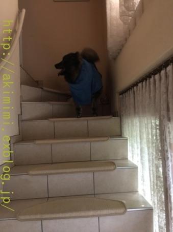 b0245488_05003429.jpg