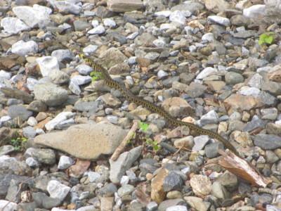 ヘビに好かれてる?_e0150006_20081927.jpg