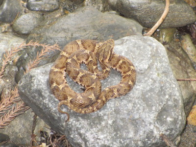 ヘビに好かれてる?_e0150006_20085458.jpg