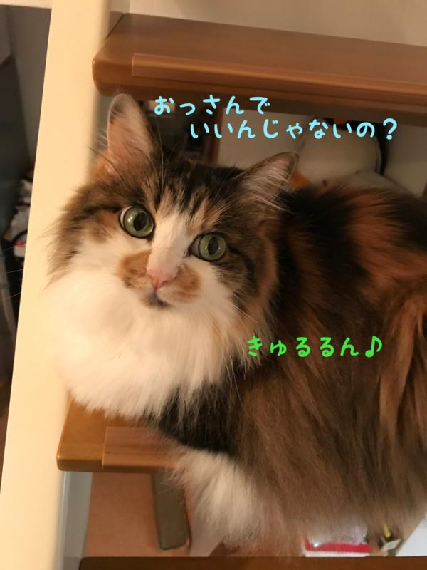 c0181639_20112402.jpg