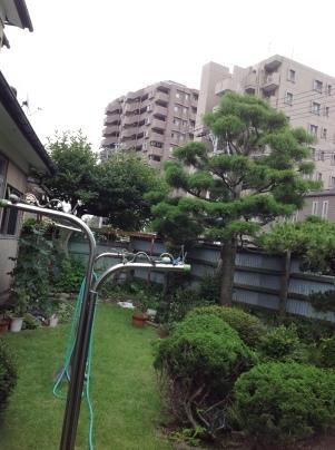 庭木剪定_c0186441_19311524.jpg