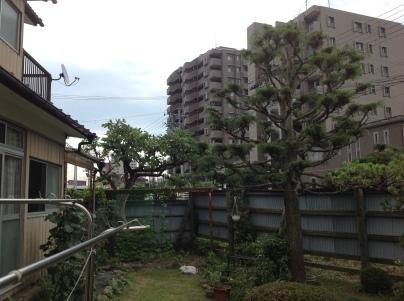 庭木剪定_c0186441_19314636.jpg