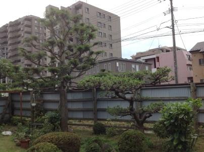 庭木剪定_c0186441_19332437.jpg