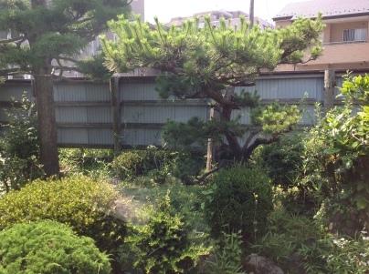 庭木剪定_c0186441_19354520.jpg