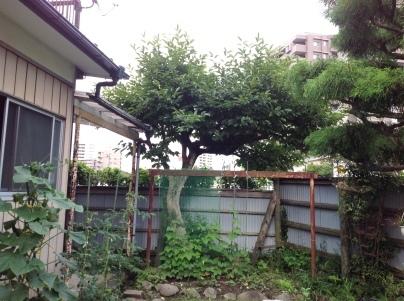 庭木剪定_c0186441_19374748.jpg