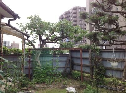 庭木剪定_c0186441_19381630.jpg