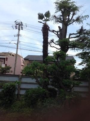 庭木剪定_c0186441_19395607.jpg