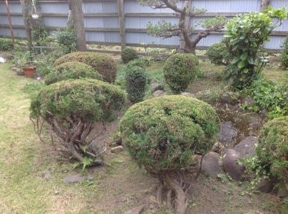 庭木剪定_c0186441_19414971.jpg