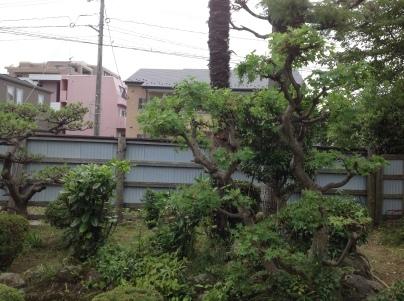 庭木剪定_c0186441_19422613.jpg