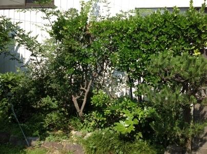 庭木剪定_c0186441_19452878.jpg
