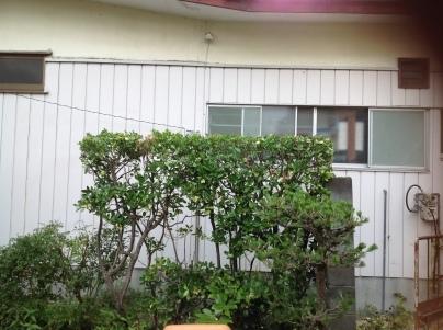庭木剪定_c0186441_19460028.jpg