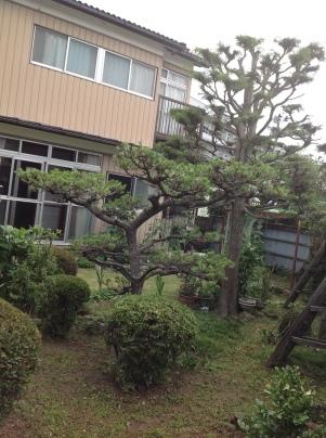 庭木剪定_c0186441_19482849.jpg