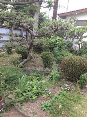 庭木剪定_c0186441_19493564.jpg