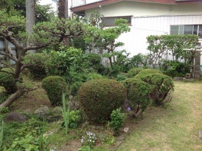 庭木剪定_c0186441_19501656.jpg