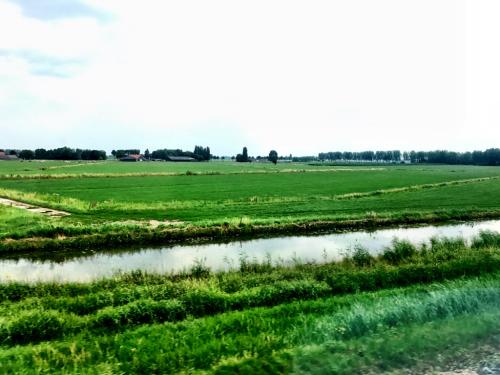 ヨーロッパ買い付け オランダ編其の三 最終編_f0226051_21110161.jpg