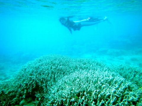 「そこに海があるから」ではなく、「わが人生に目的があるから」海に向かう。_b0141773_16033416.jpg