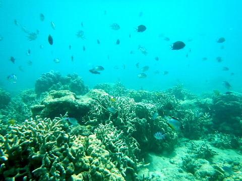 「そこに海があるから」ではなく、「わが人生に目的があるから」海に向かう。_b0141773_16040489.jpg