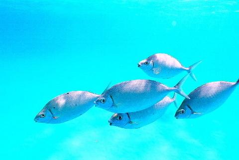 「そこに海があるから」ではなく、「わが人生に目的があるから」海に向かう。_b0141773_16084952.jpg