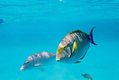 「そこに海があるから」ではなく、「わが人生に目的があるから」海に向かう。_b0141773_16094667.jpg
