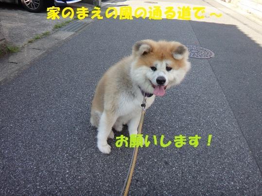 f0121712_16200904.jpg