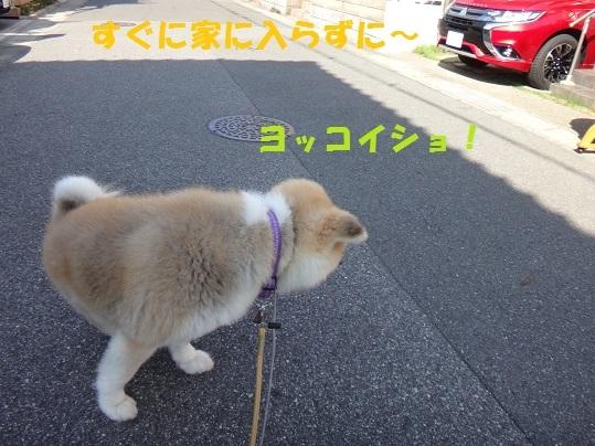 f0121712_16201487.jpg