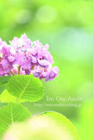 夏の空_d0300034_17004916.jpg