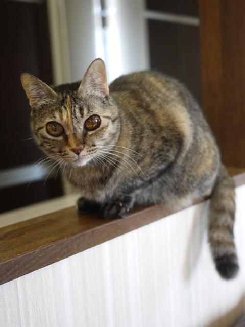 猫のお留守番 ワサビちゃん天ちゃん麦くん茶くん編。_a0143140_21590578.jpg
