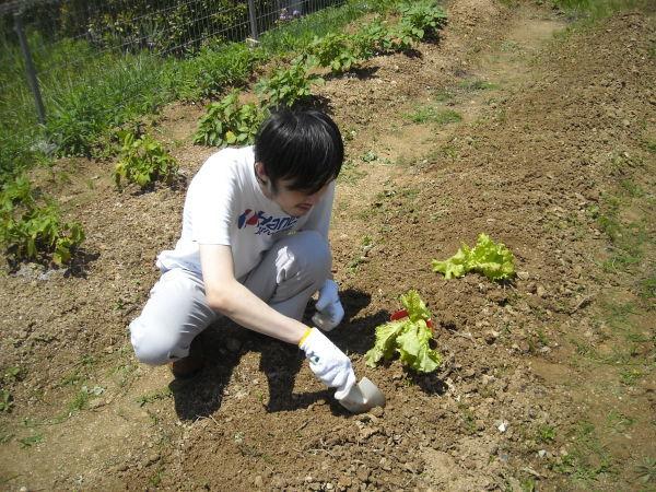 農作業 7月_a0115956_11063911.jpg