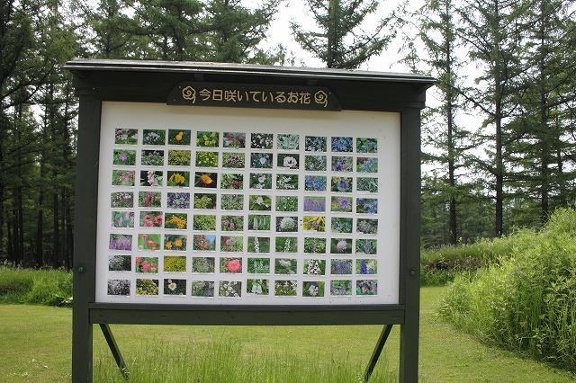 北海道旅行 風のガーデン_f0374092_14194553.jpg