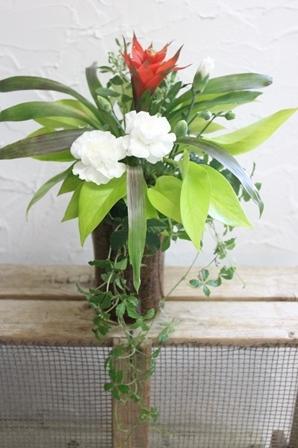 「涼夏」 観葉植物ギャザリング _d0227610_22144024.jpg