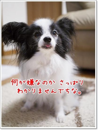 d0013149_00280143.jpg