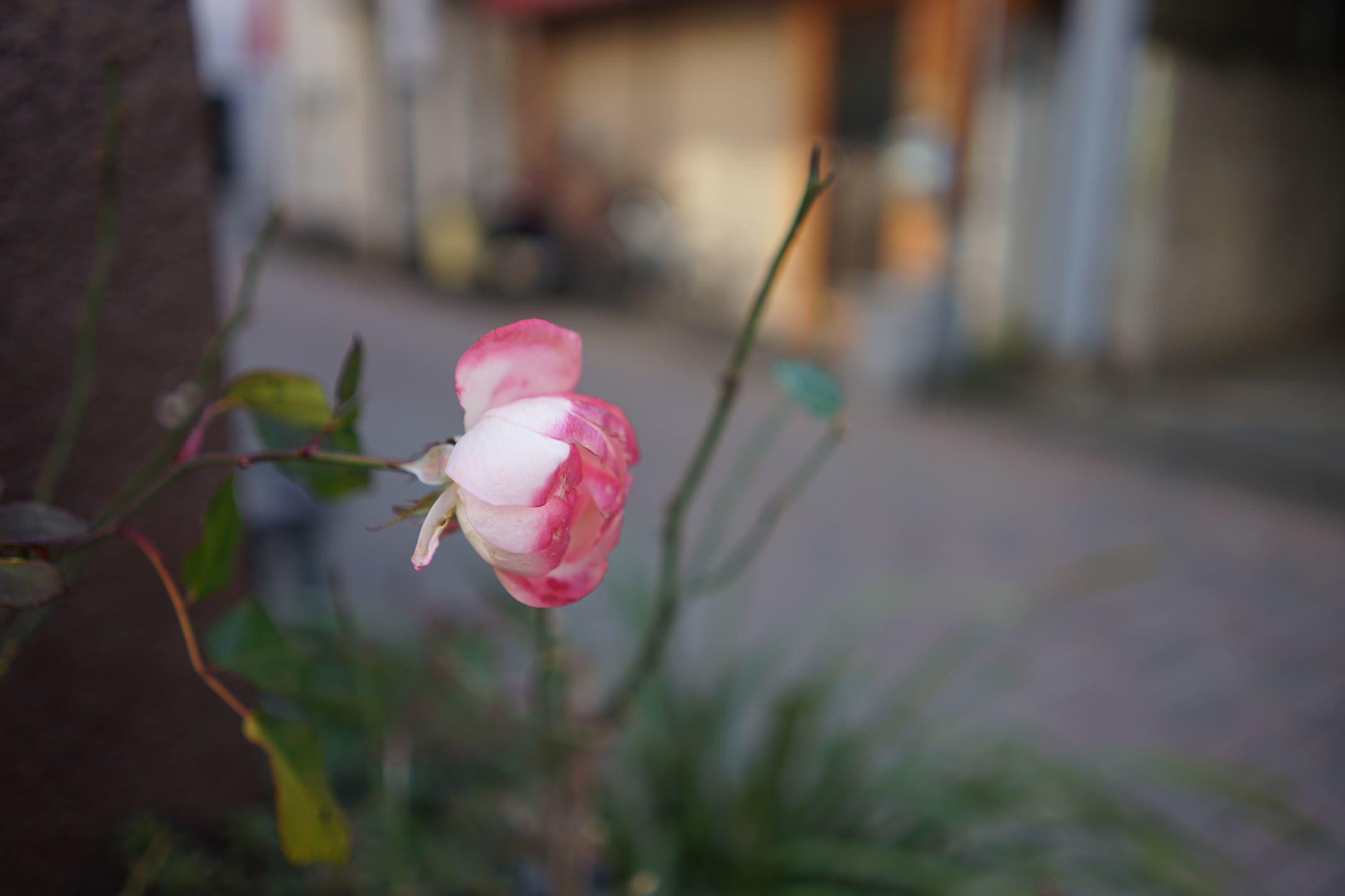 府中駅周辺 23_b0360240_22130263.jpg